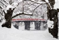 Attraction japan in winter travel intenerary snow tokyo tour blog january tips